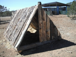 A Red Wattle Inn, our portable pig hut